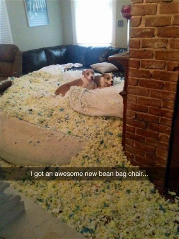 I got an awesome new bean bag chair Picture Quote #1