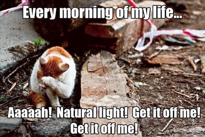 Every morning of my life... Aaaaah! Natural light! Get it off me! Get it off me! Picture Quote #1
