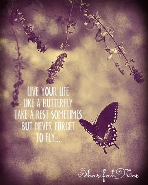 Life Is Like A Butterfly Quote 1 Picture Quote #1