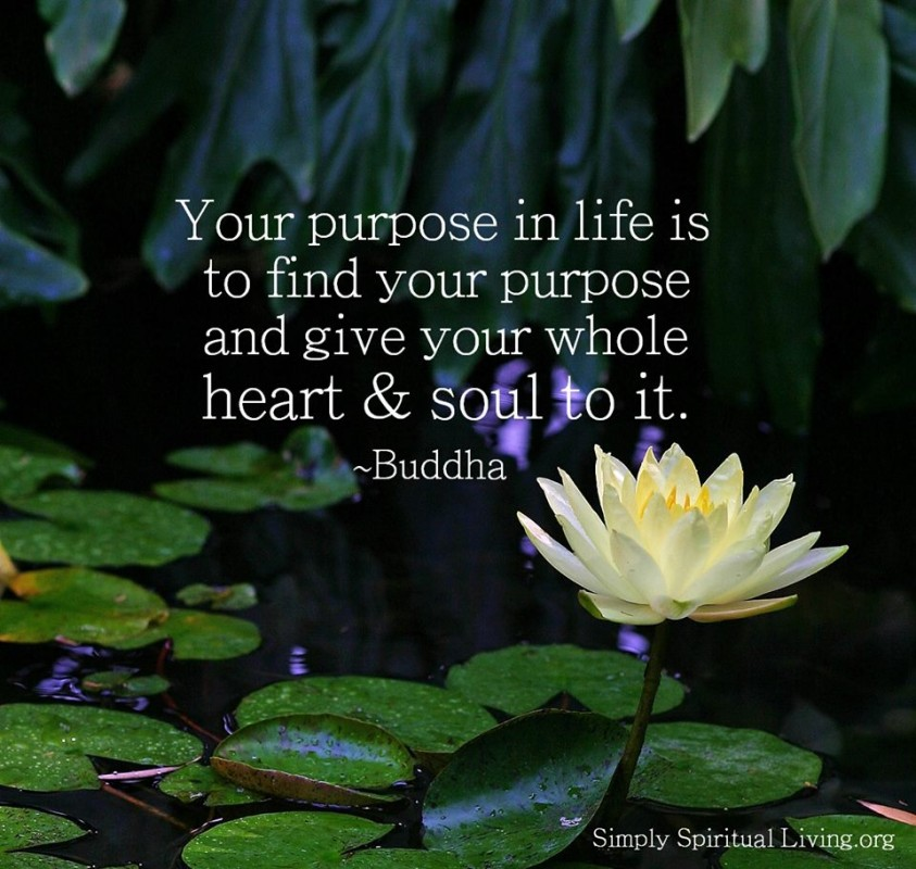 Purpose Quote 1 Picture Quote #1