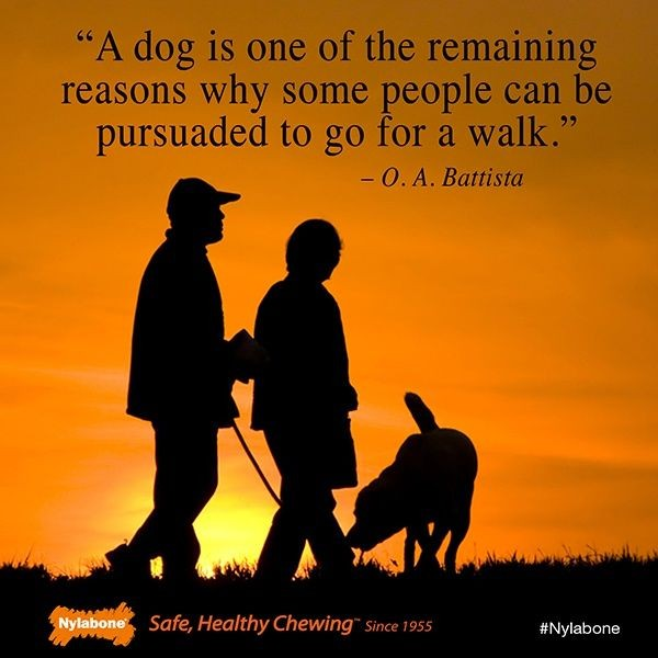 Dog Walking Quote 2 Picture Quote #1