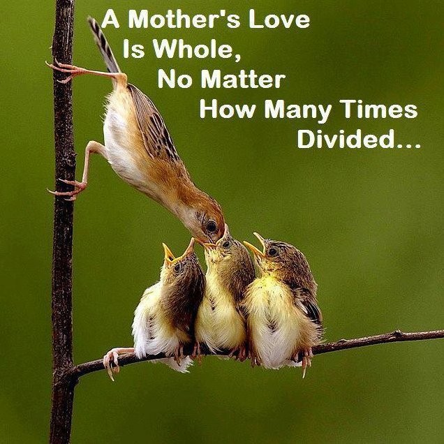 Mothers Love Quote 6 Picture Quote #1