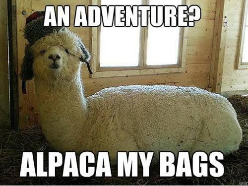 An adventure? Alpaca my bags Picture Quote #1