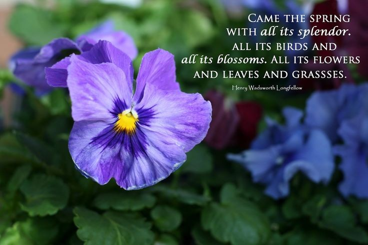 Henry Wadsworth Longfellow Quote 4 Picture Quote #1