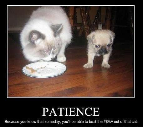 Patience. Because you know that someday, you'll beat the #$%! out of that cat Picture Quote #1
