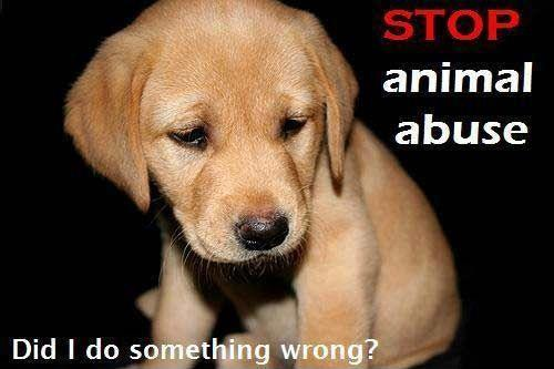 Animal Cruelty Quotes New Stop Animal Abusedid I Do Something Wrong  Picture Quotes