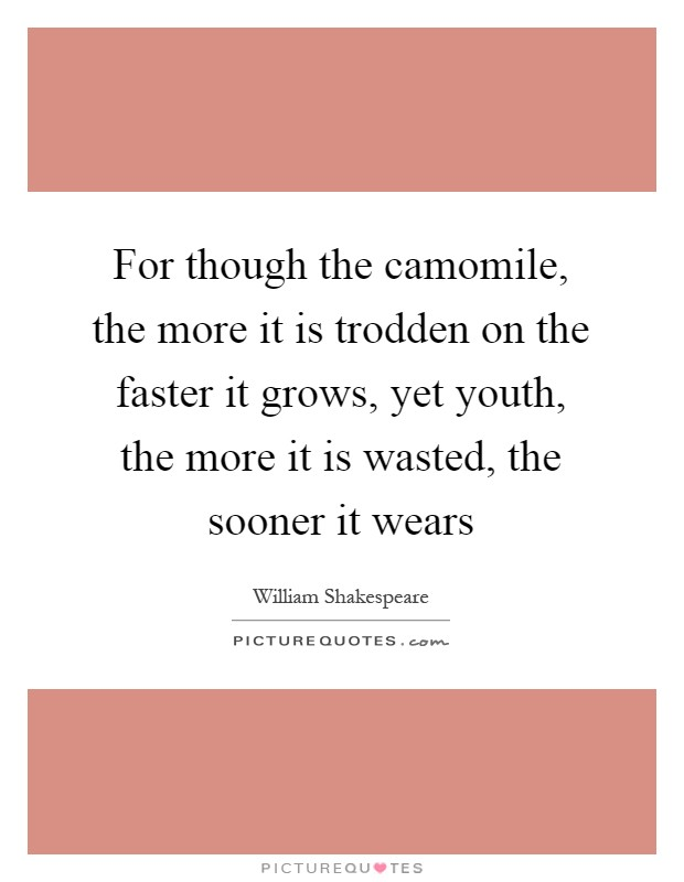 For though the camomile, the more it is trodden on the faster it grows, yet youth, the more it is wasted, the sooner it wears Picture Quote #1