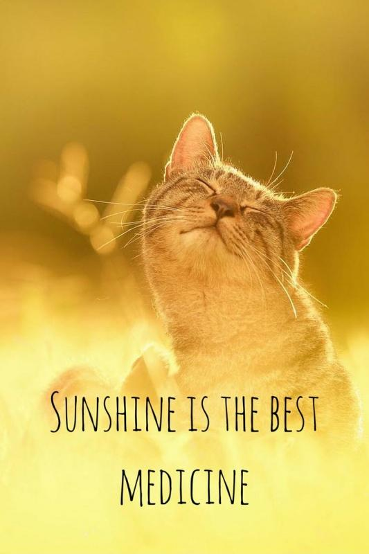 Sunshine is the best medicine  Picture Quotes