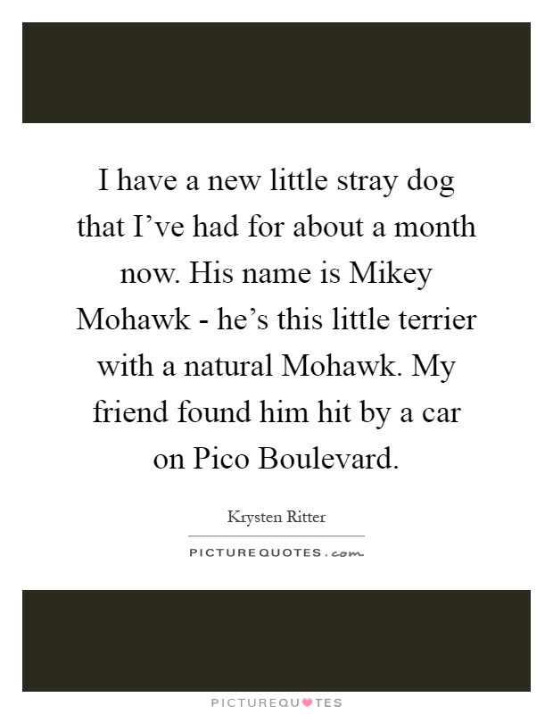 I have a new little stray dog that I've had for about a month now. His name is Mikey Mohawk - he's this little terrier with a natural Mohawk. My friend found him hit by a car on Pico Boulevard Picture Quote #1