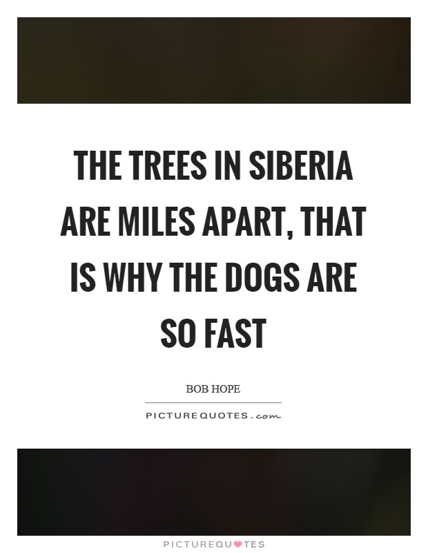 The trees in Siberia are miles apart, that is why the dogs are so fast Picture Quote #1