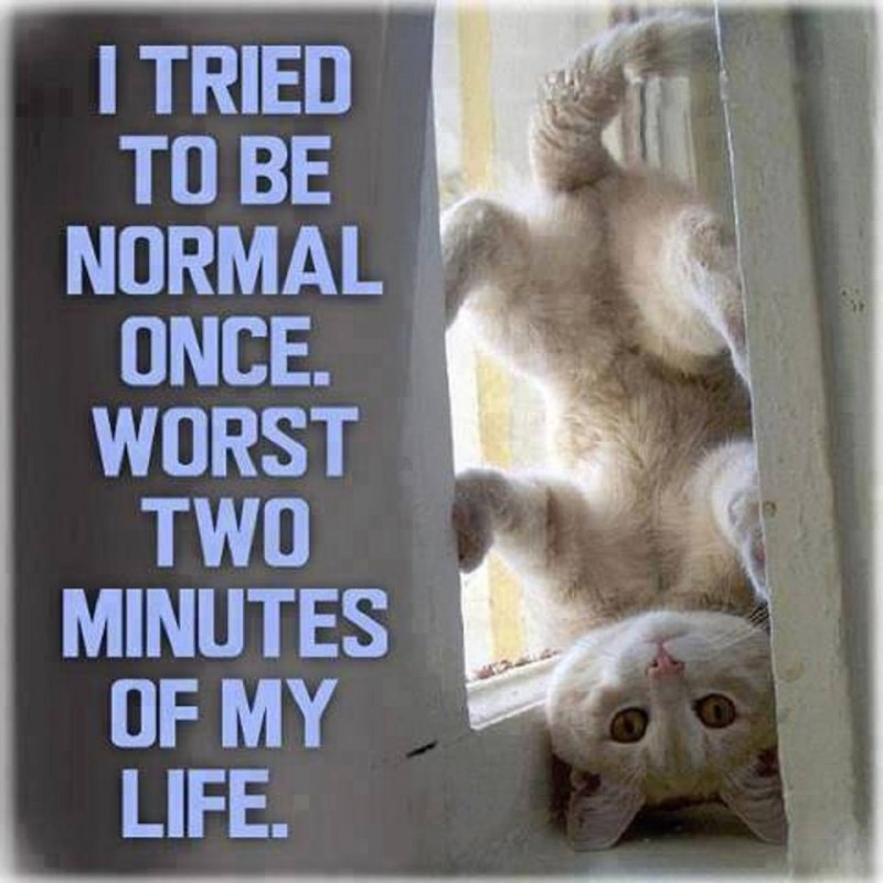 I Tried To Be Normal Once Quote 1 Picture Quote #1