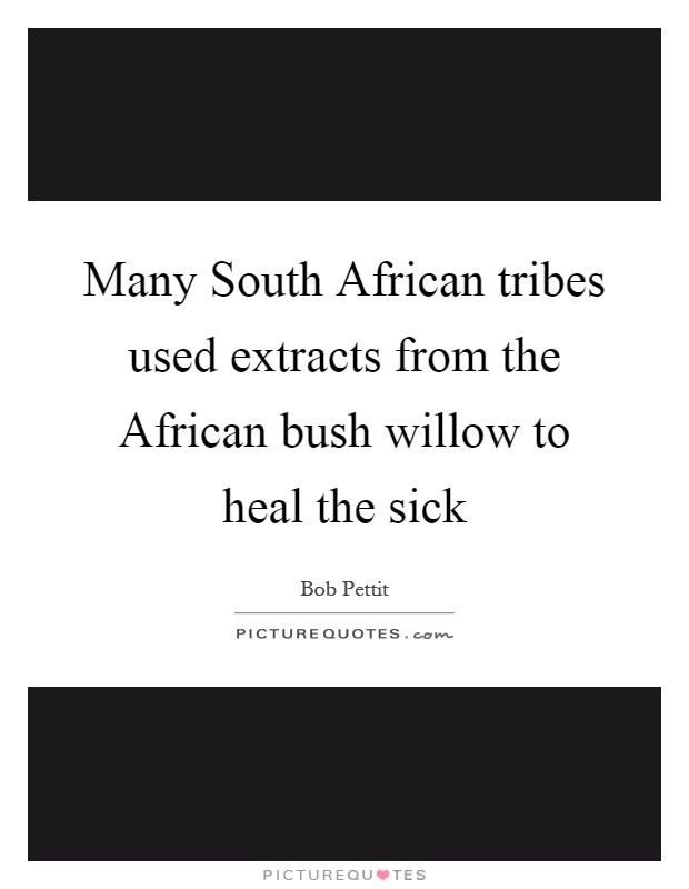 Many South African tribes used extracts from the African bush willow to heal the sick Picture Quote #1