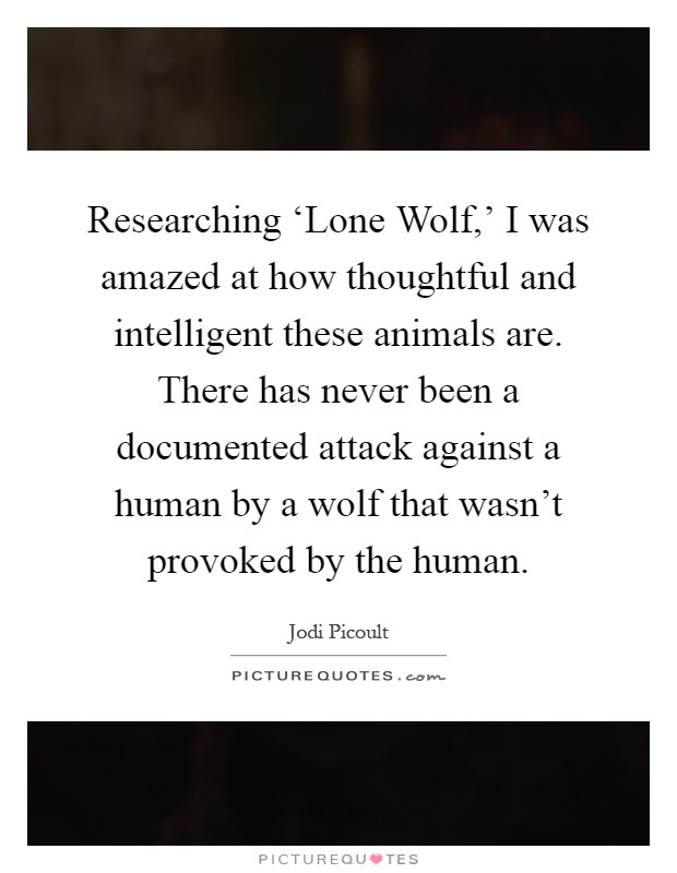 Researching 'Lone Wolf,' I was amazed at how thoughtful and intelligent these animals are. There has never been a documented attack against a human by a wolf that wasn't provoked by the human Picture Quote #1
