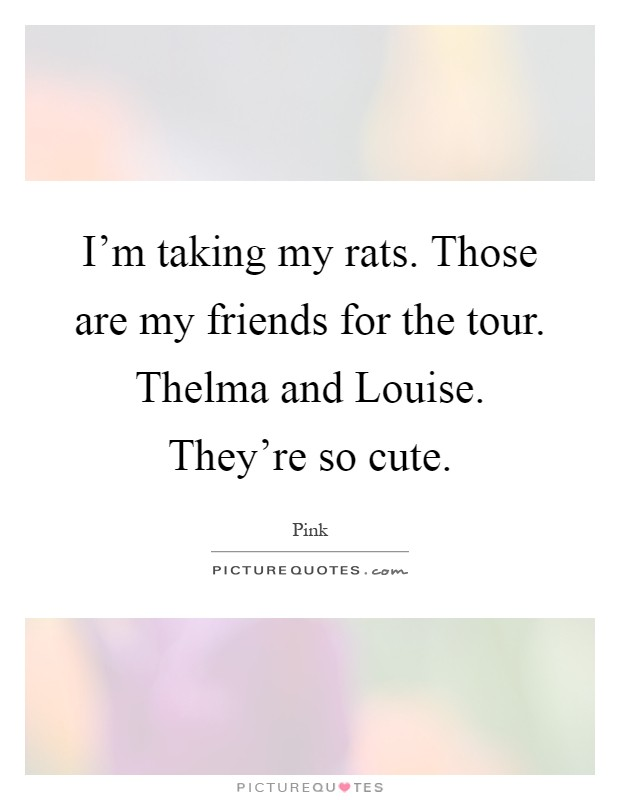 I'm taking my rats. Those are my friends for the tour. Thelma and Louise. They're so cute Picture Quote #1