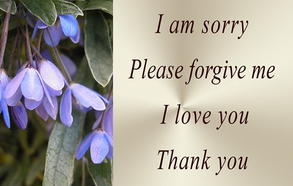 Please Forgive Me Quote 3 Picture Quote #1