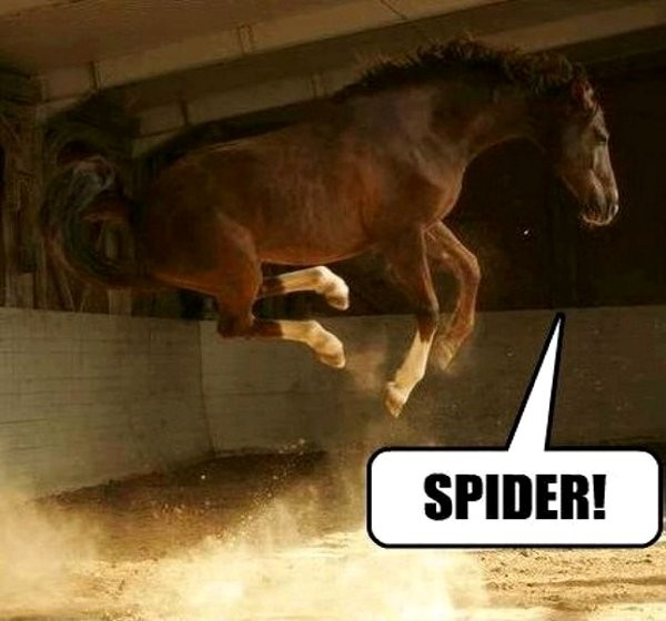 Funny Horse Jumping Quote 1 Picture Quote #1