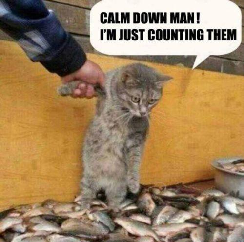 Calm Down Quote 8 Picture Quote #1