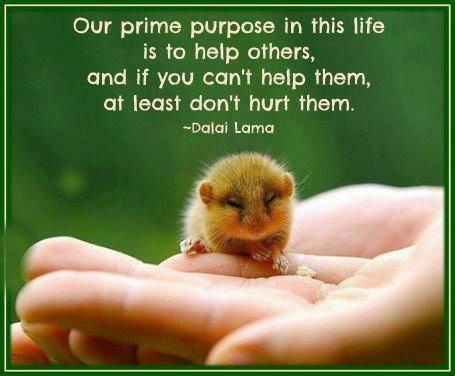 Purpose Of Life Quotes Best Purpose Of Life Quotes & Sayings  Purpose Of Life Picture Quotes