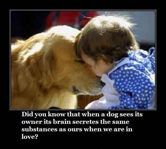 Dog Love Quote 3 Picture Quote #1
