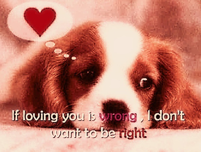 Cute Dog Love Quote 1 Picture Quote #1