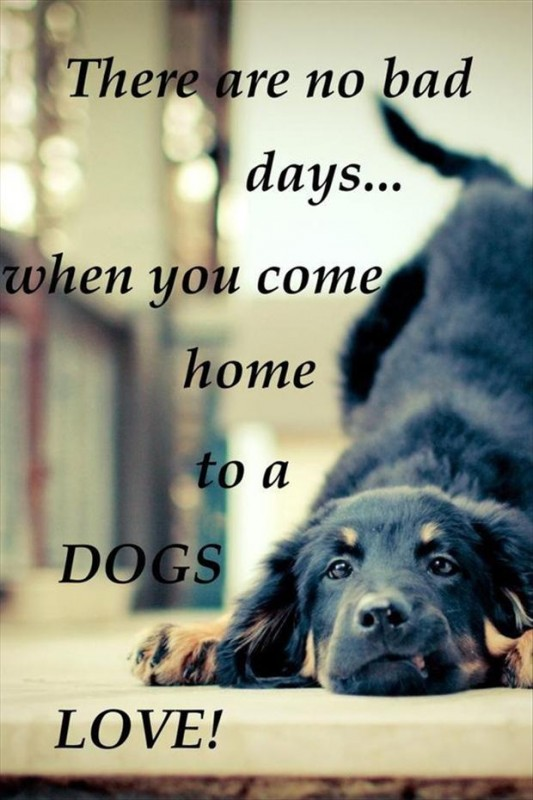 Dog Love Quote 4 Picture Quote #1