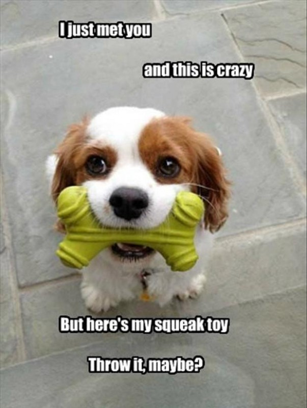 Crazy Funny Quote About Dogs 1 Picture Quote #1