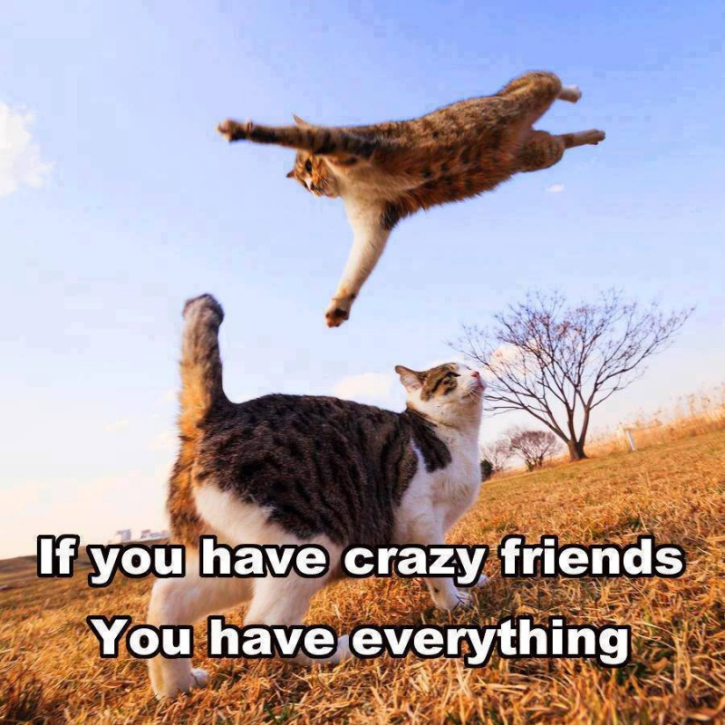 Crazy Funny Quote 6 Picture Quote #1