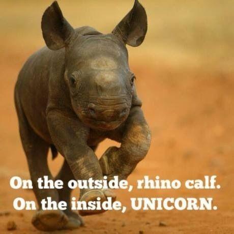 Unicorn Quote 5 Picture Quote #1
