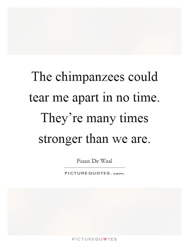 The chimpanzees could tear me apart in no time. They're many times stronger than we are Picture Quote #1
