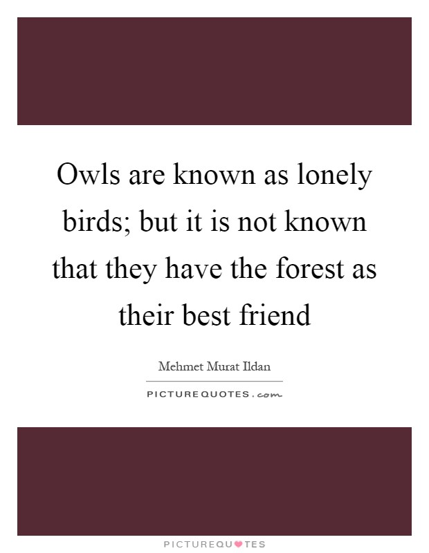 Owls are known as lonely birds; but it is not known that they have the forest as their best friend Picture Quote #1