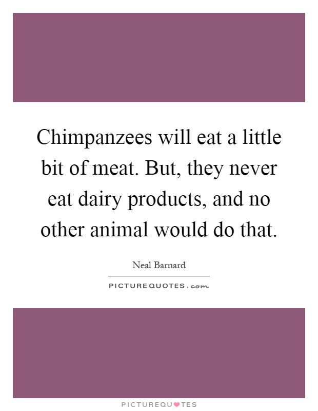 Chimpanzees will eat a little bit of meat. But, they never eat dairy products, and no other animal would do that Picture Quote #1