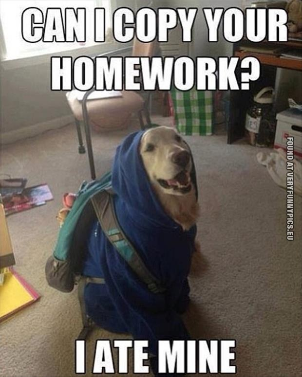 Funny Dog Homework Quote 1 Picture Quote #1