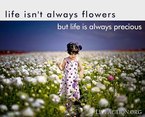 Life Is Precious Quote 4 Picture Quote #1