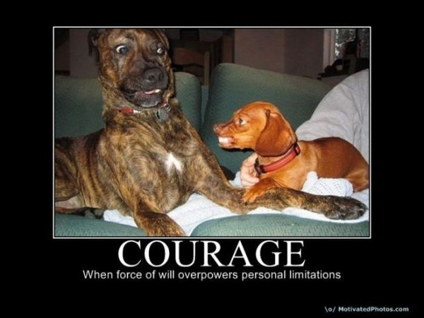 Courageous Quote 4 Picture Quote #1
