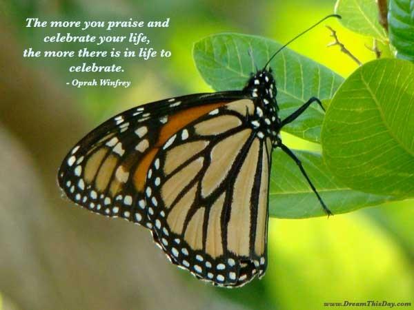 Praise Quote 1 Picture Quote #1