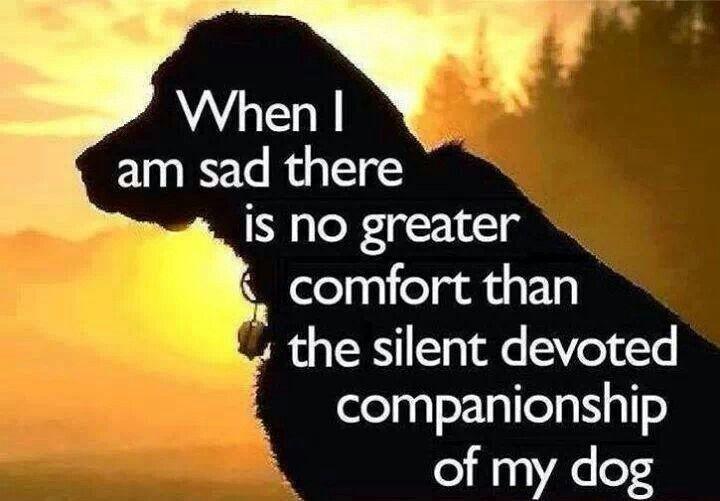 Companionship Quote 2 Picture Quote #1
