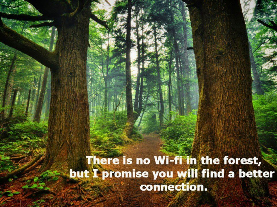 Forest Quote 1 Picture Quote #1