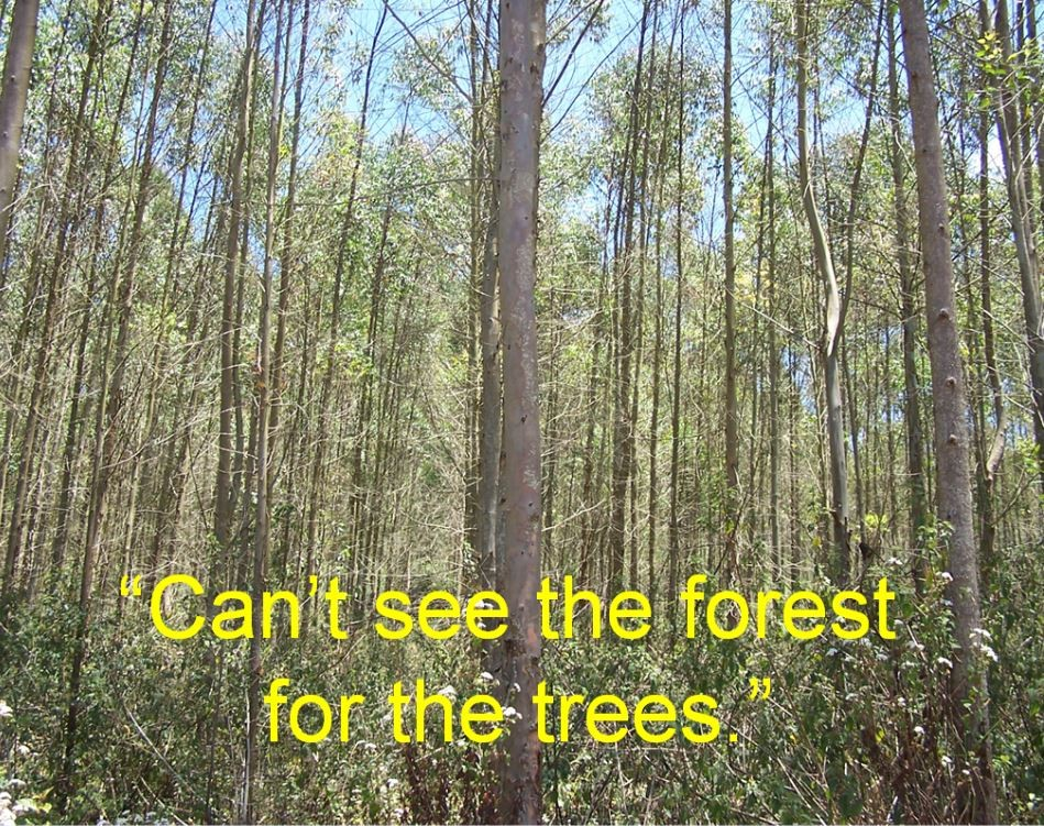 Can't see the forest for the trees Picture Quote #1
