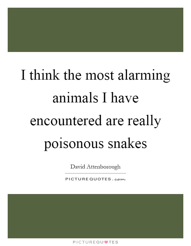 I think the most alarming animals I have encountered are really poisonous snakes Picture Quote #1