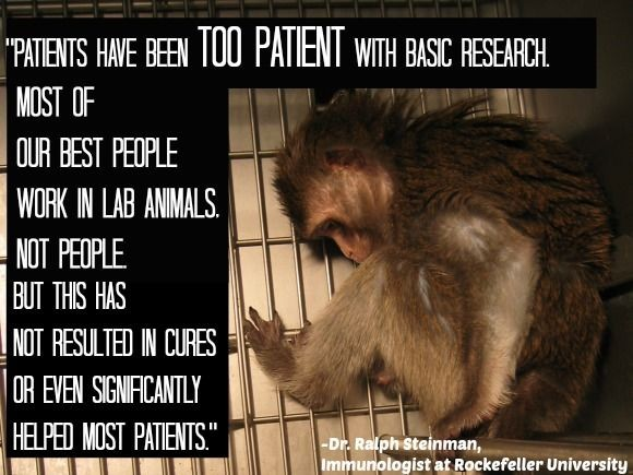 Animal Research Quote 3 Picture Quote #1