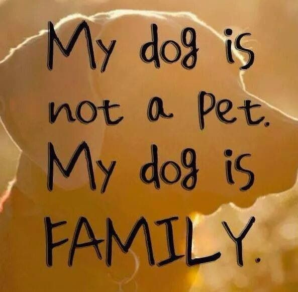 My Dog Is My Family Quote 1 Picture Quote #1