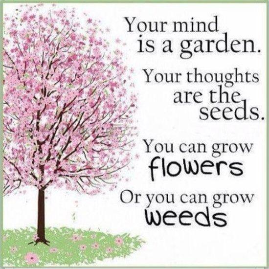 Your mind is a garden, your thoughts are the seeds. You can grow flowers, or you can grow weeds Picture Quote #1