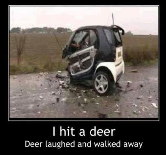 Funny Car Quote Quote Number 690256 Picture Quotes