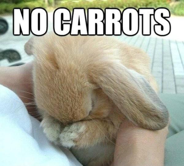 Bunny Rabbit Quote 2 Picture Quote #1