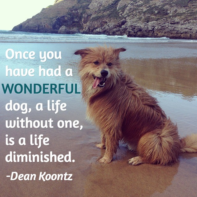 Dog Death Quote 5 Picture Quote #1