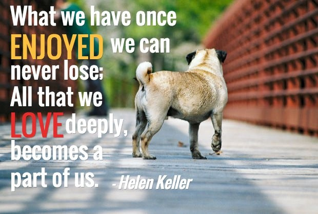 Dog Death Quote | Quote Number 694594 | Picture Quotes