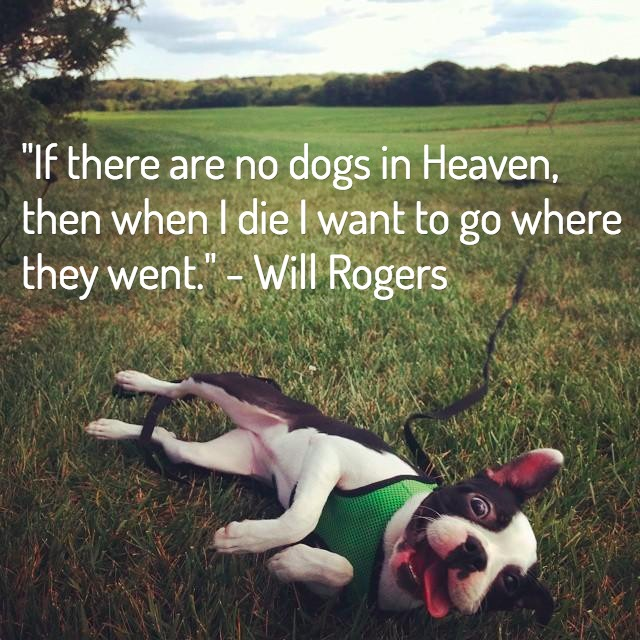 Dog Death Quote 7 Picture Quote #1