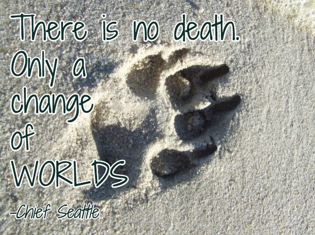 Dog Death Quote 9 Picture Quote #1