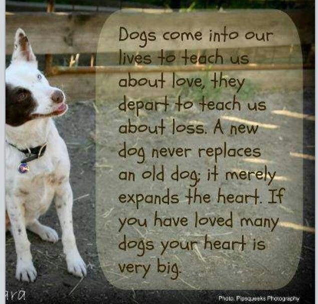 Dog Death Quote 11 Picture Quote #1
