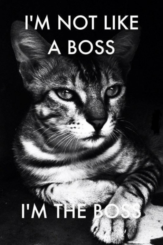 Work Like A Boss Quote 1 Picture Quote #1